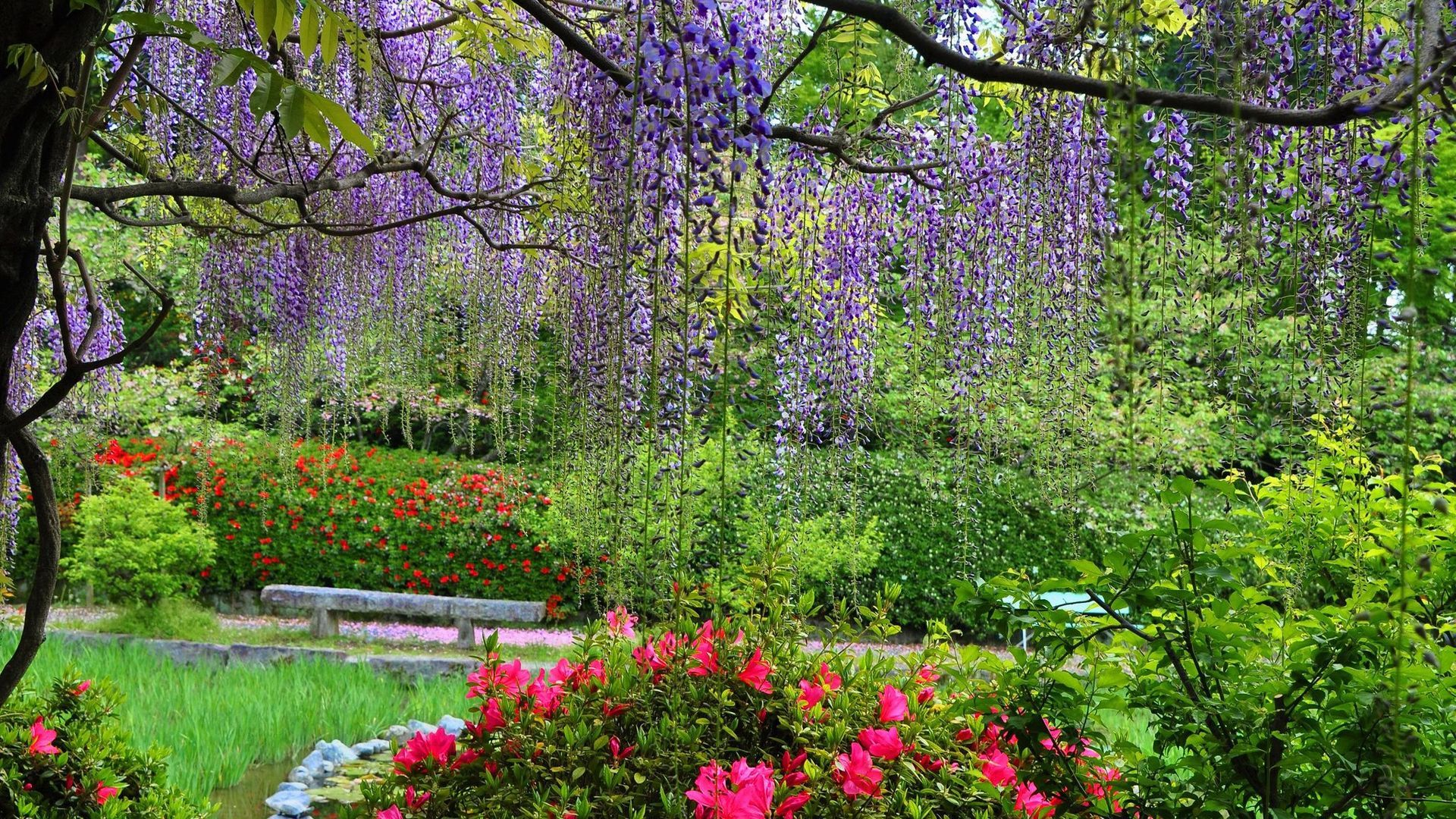 Awesome Spring Nature Park Greenery View Background Images Wallpapers Spring Nature Background Images