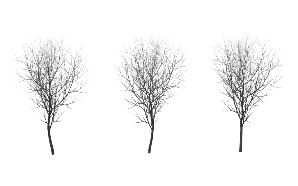 Winter Trees 06