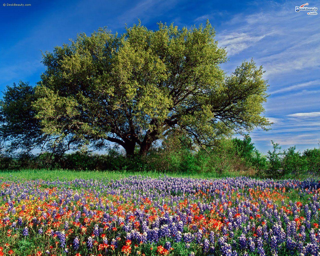 ad001f1b697e3f7c2d4a78f36175ba3d - Hill Country Gardens New Braunfels Tx Facebook