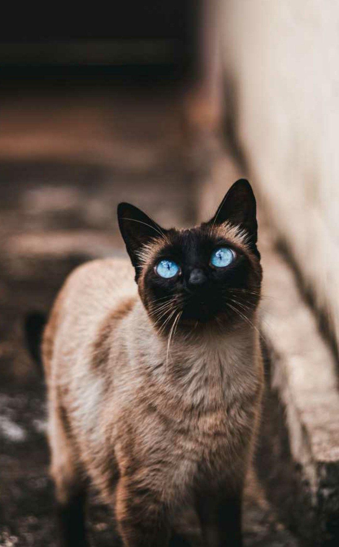 Pin Auf Cat Planet