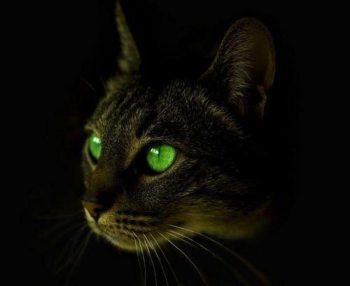 Intense eyes