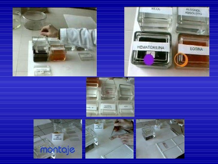 Resultado De Imagen Para Tecnica Histologica De Rutina Histologia Montaje Microscopio