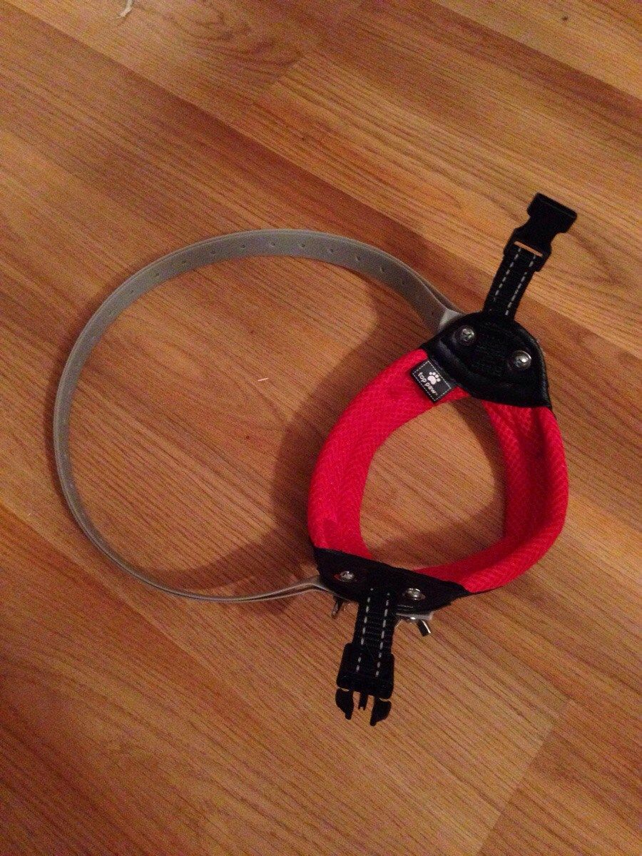 Source This harness gave our blind dog a boost to his