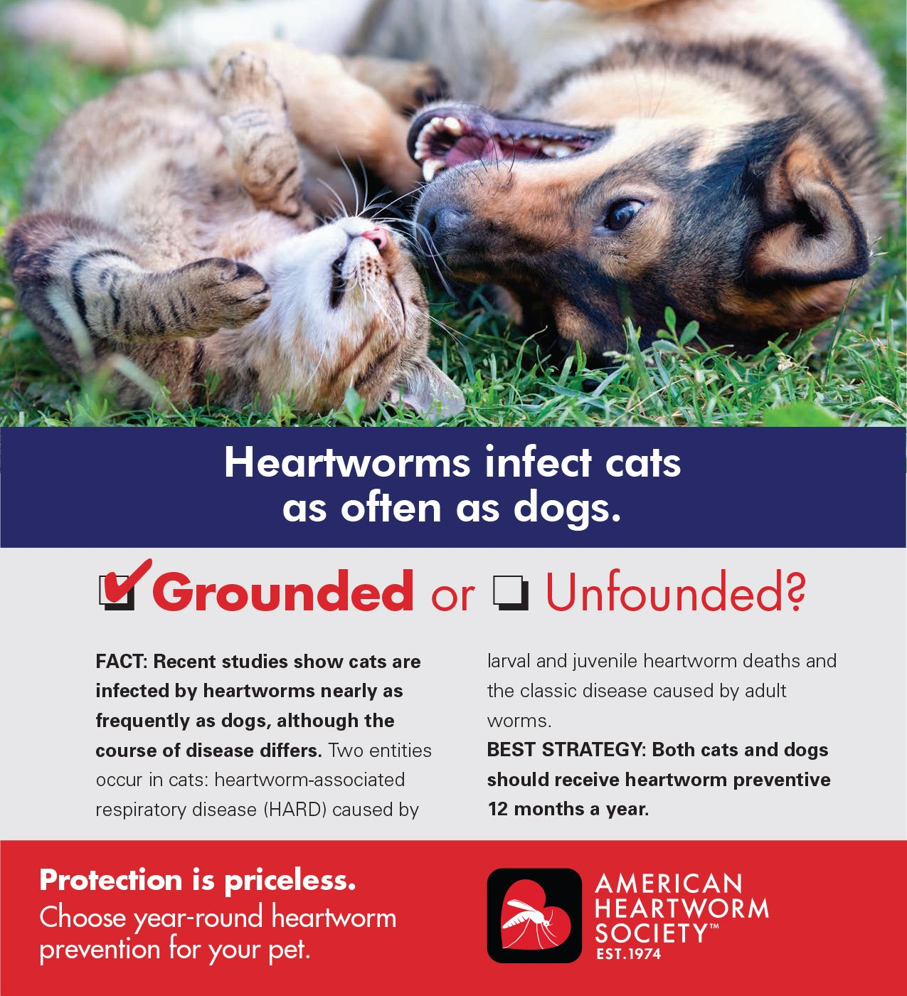 Pin by St Francis Animal Hospital on Heartworms, Fleas and