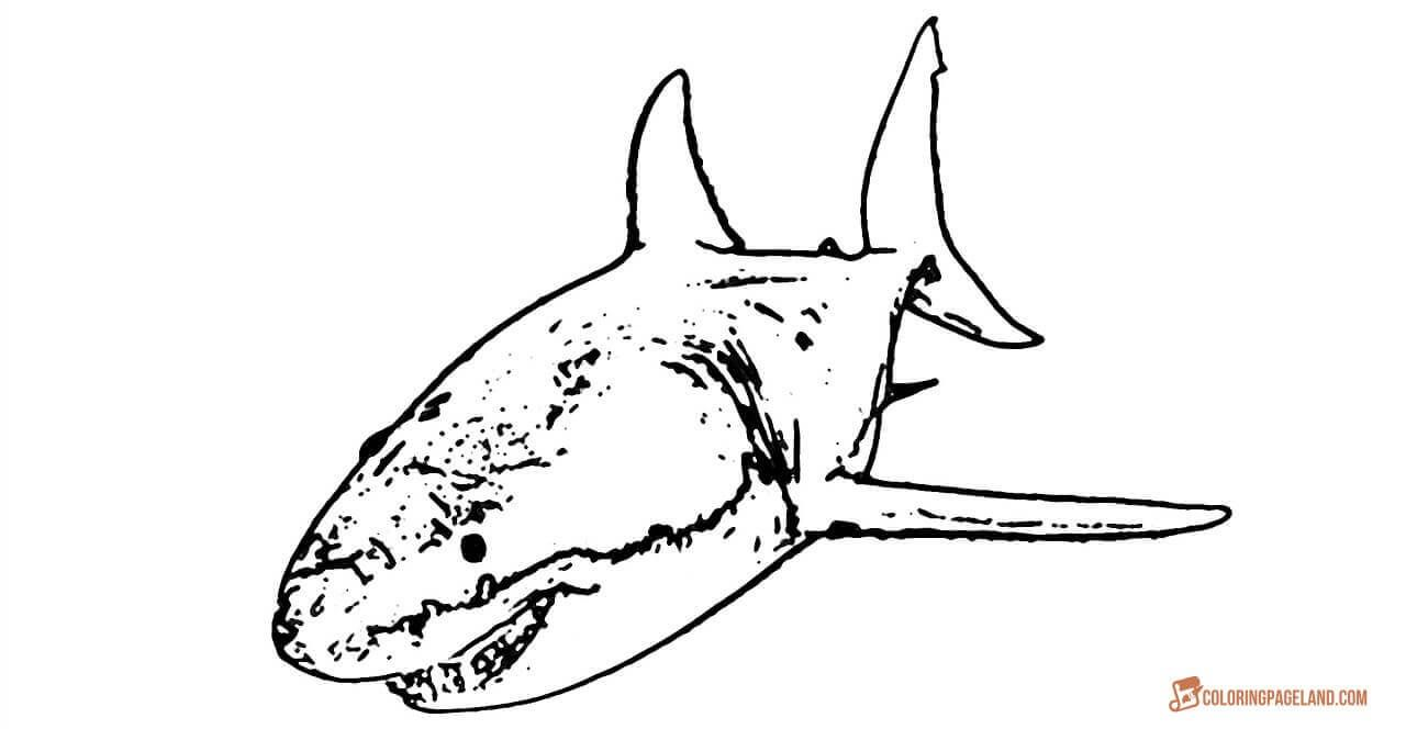 graphic relating to Shark Printable identify Fantastic White Shark Coloring Webpages - Downloadable and