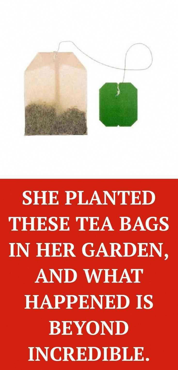 Look. Click the link to get more information SHE PLANTED THESE TEA BAGS IN HER GARDEN Every woman sh...