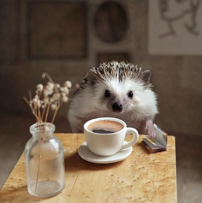 Cinnamon The Hedgehog Is Living Her Best Life, Her
