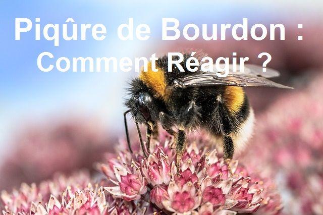 Piqûre de Bourdon : Comment réagir ?   Bourdon, Piqure ...