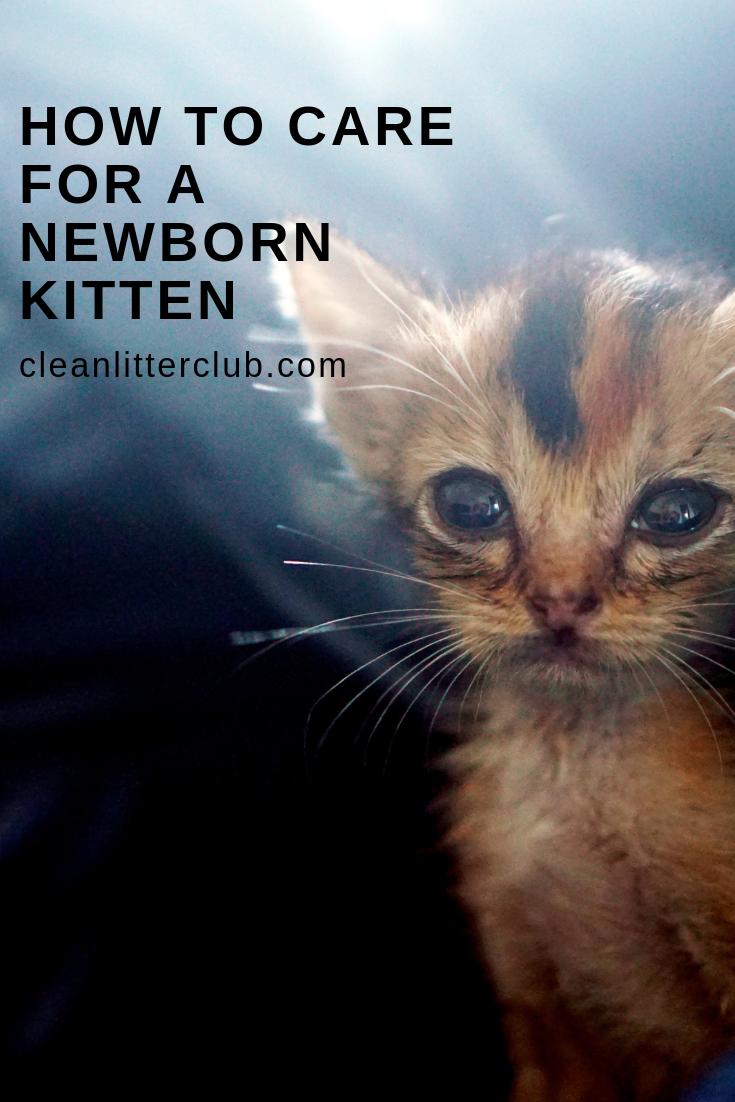 How To Care For A Newborn Kitten Newborn Kittens Cats Kittens Baby Cats