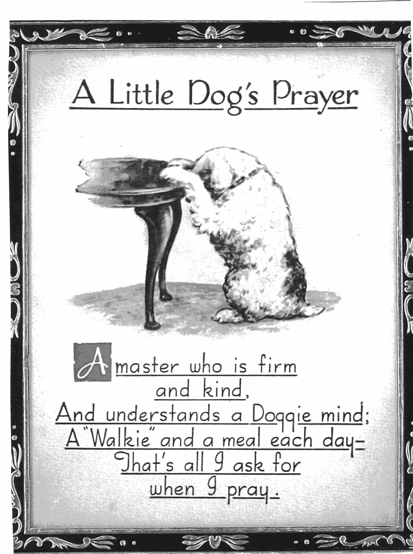 A little dogs prayer cute little animals animals