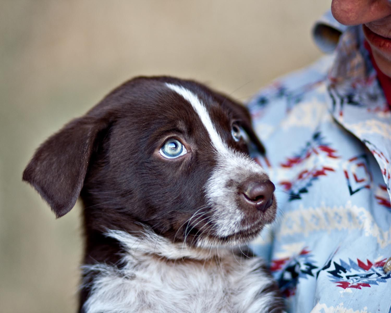 Park Art|My WordPress Blog_Border Collie Puppies For Sale Southern California