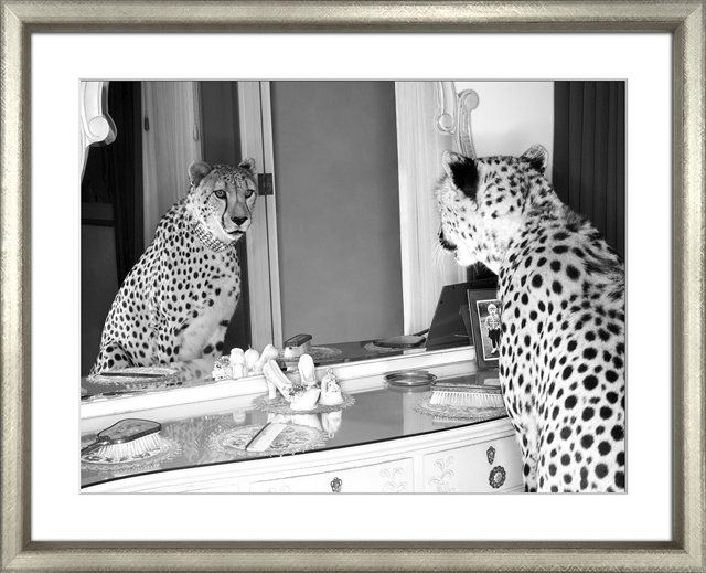 Image result for cheetah who shops mirror william stafford