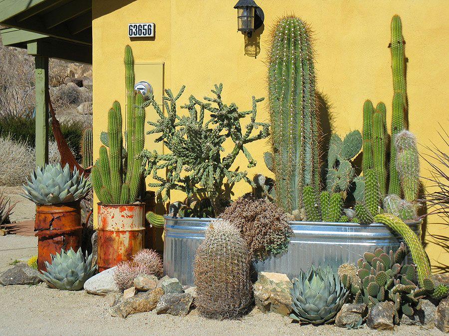 The 25+ best Cacti garden ideas on Pinterest