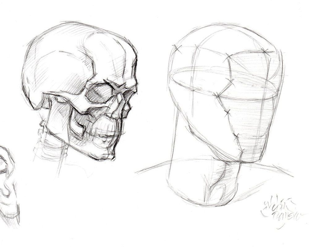 STRUCTURE OF THE HEAD by AbdonJRomero on DeviantArt | Drawing ...