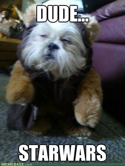 Did You Know No One In Star Wars Ever Says The Word Ewok Funny Animal Pictures Funny Dog Pictures Funny Animals