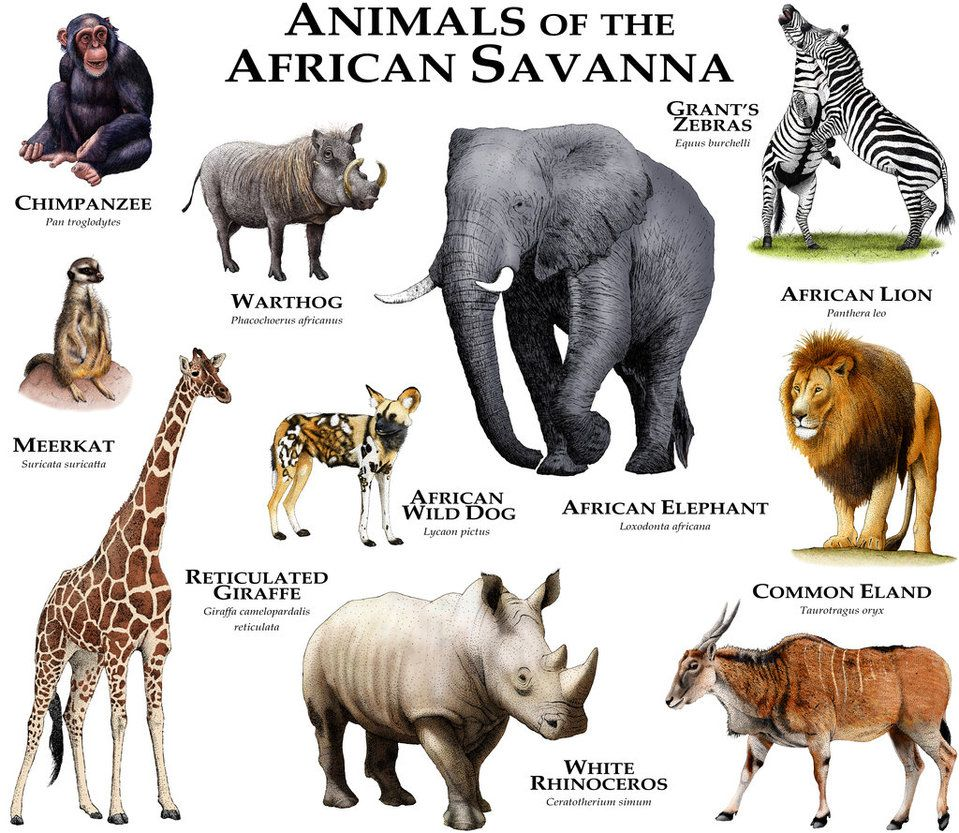 Animals Of The African Savanna By Rogerdhall Savanna Animals African Savanna Animals Africa Animals