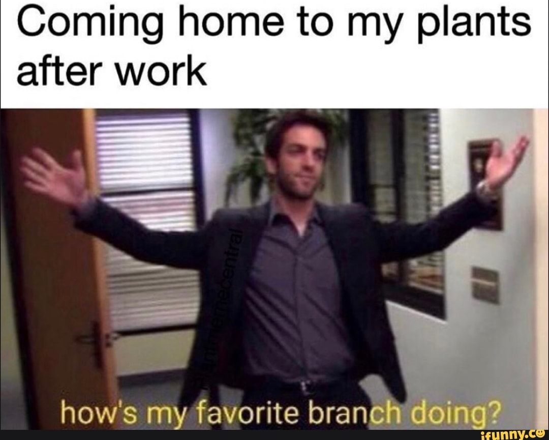 Coming Home To My Plants After Work How S My Favorite Branchª º A Ifunny In 2020 Funny Quotes Funny Girl Quotes Funny Girl Pics