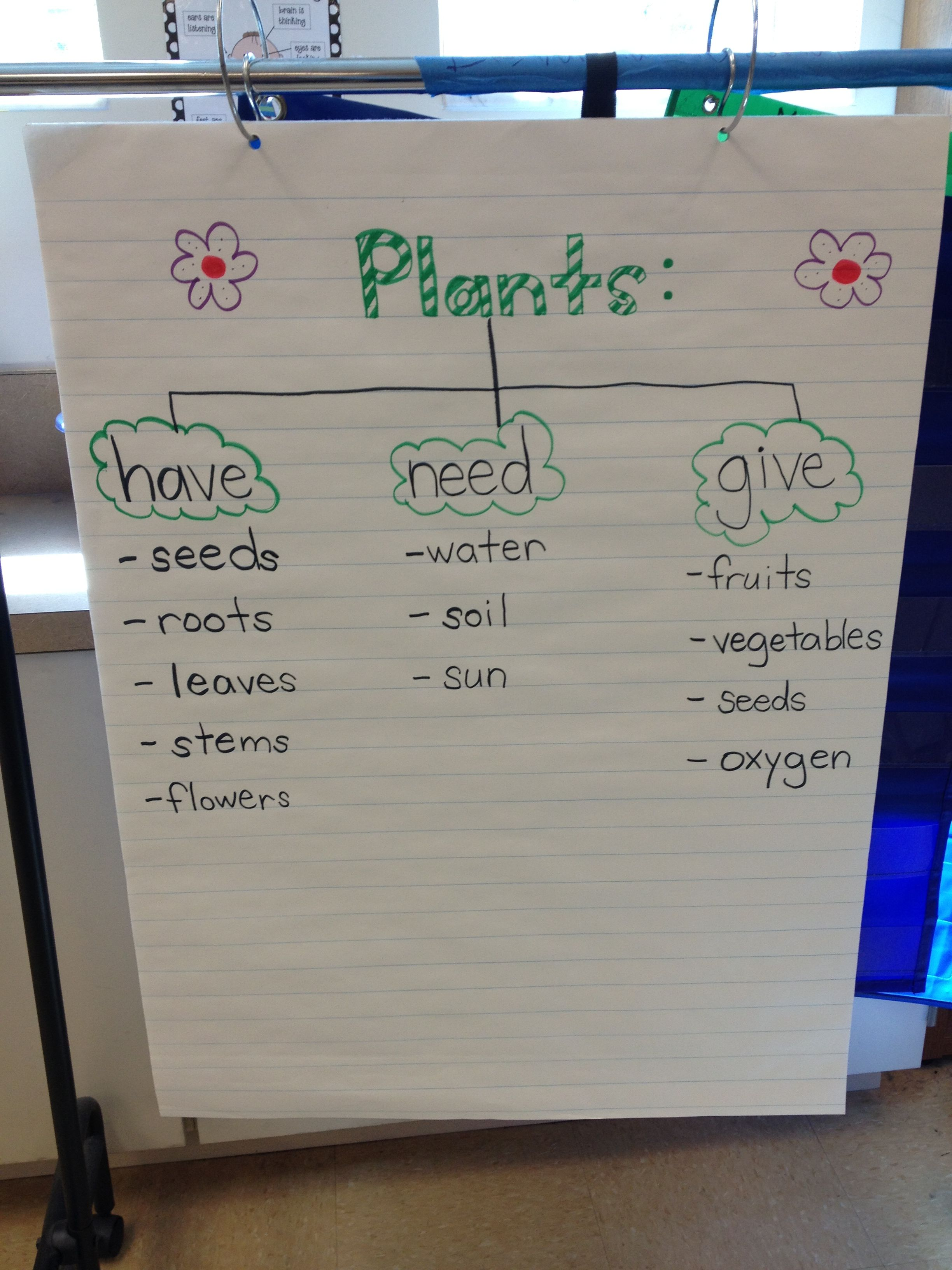 Plants Anchor Chart Made By Our Kindergarten Class