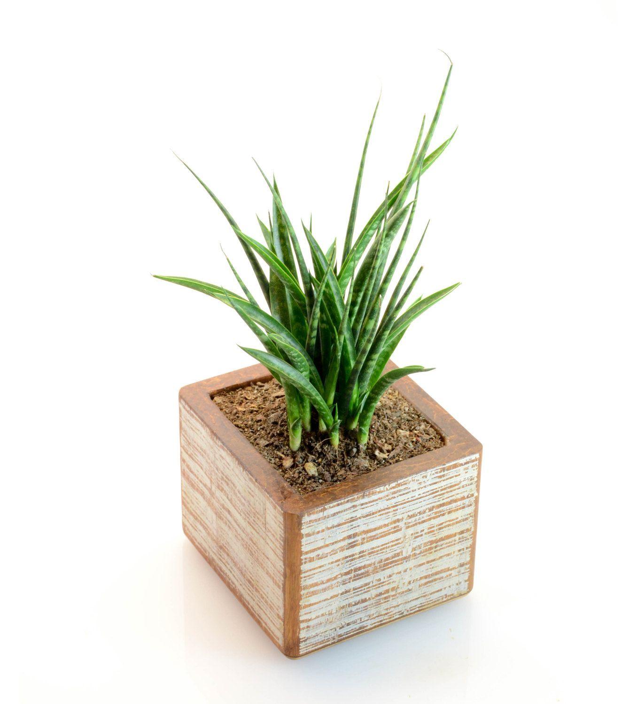 White Bamboo Planter Rectangular Planter Rustic Planter Box