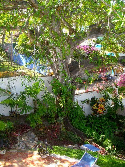 un jardin mexicain plut t luxuriant jardin secs pinterest. Black Bedroom Furniture Sets. Home Design Ideas