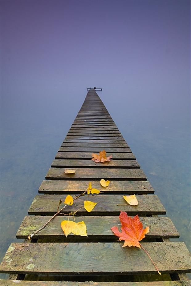 dock stretched out over a lake, picture of the day