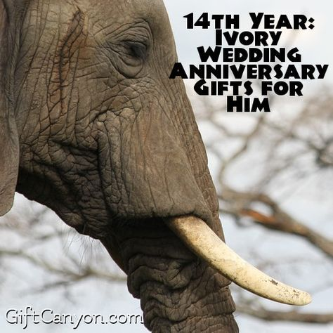 14th Year Ivory Wedding Anniversary Gifts for Him & 14th Year: Ivory Wedding Anniversary Gifts for Him | anniversary ...