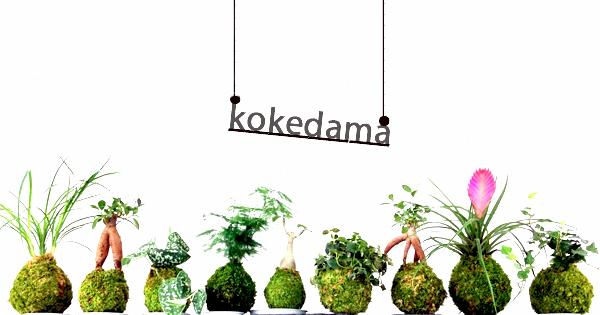 Do you know about String Garden or kokedama ! #Kokedamasmateriales