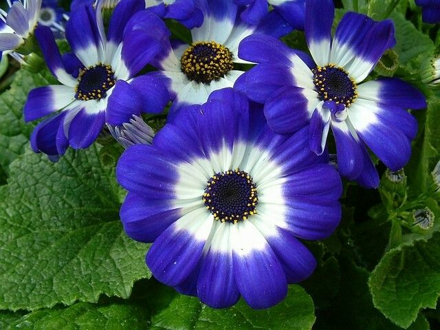 Изображение Цветы от пользователя Ольга Попова на доске ...