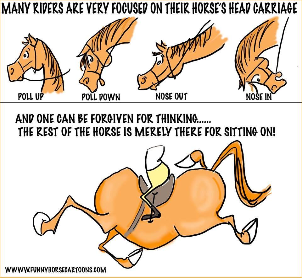 Funny Horse Cartoons Horse Cartoon Horse Quotes Funny Horse Jokes