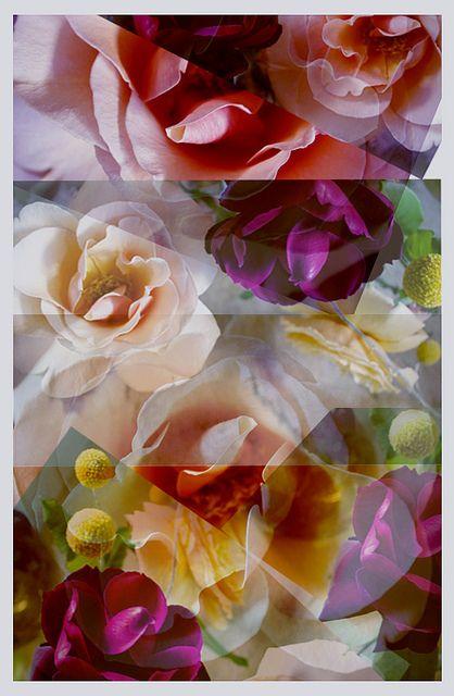desert rose collage