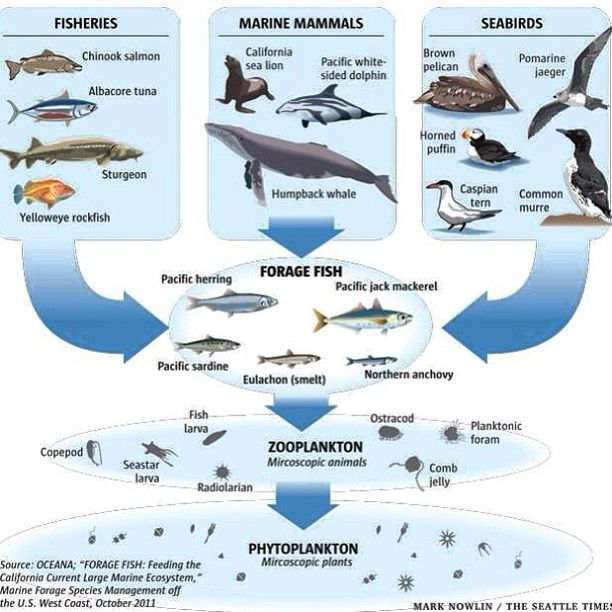 The Ocean Has A Very Complex Ecosystem But It Does Not Take Rocket Science To Figure This Out Eliminating An Animal W Ocean Science Ocean Food Web Food Chain