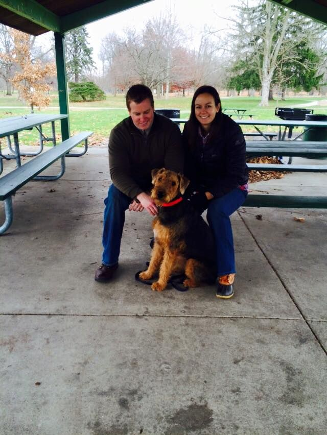 Pin By Indianapolis Dog Trainers On Indydogtrainer Dogs Animals
