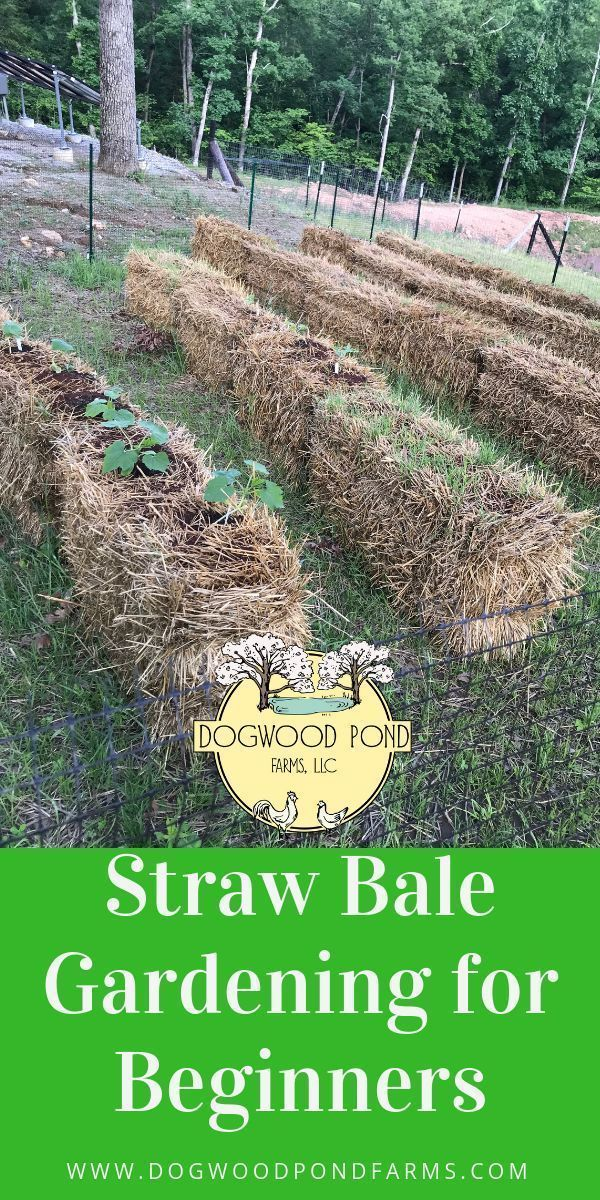 Straw Bale Gardening Is A Cheap Easy Way To Grow Vegetables If You Have Bad Soil Or Don Straw Bale Gardening Gardening For Beginners Organic Vegetable Garden