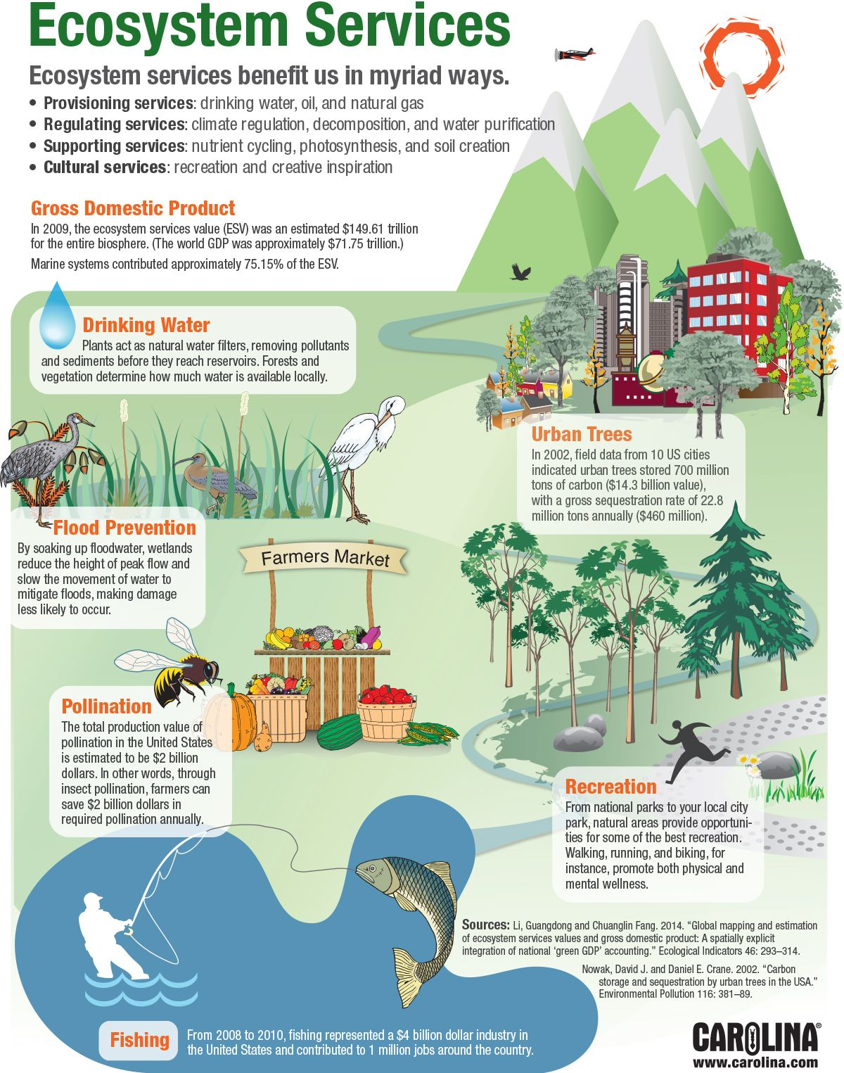Item 7 Infographic Ecosystem Services