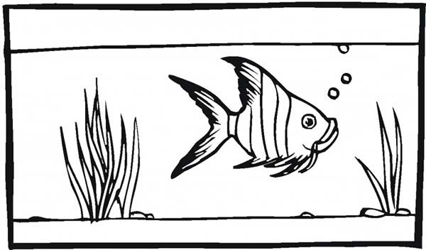 Fish Tank for Angel Fish Coloring Page - NetArt | creative kids ...