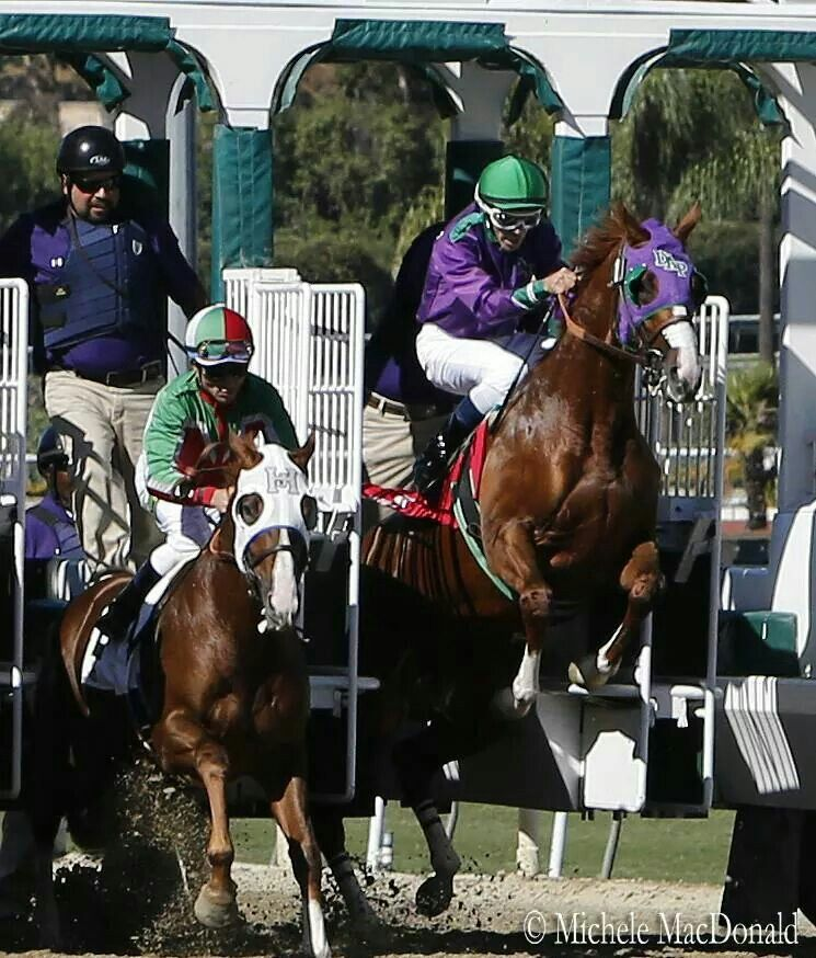 California Chrome leaving the gate - by Michelle MacDonald. WOW! GIVE A HAND TO THE JOCKEY!!!!!!