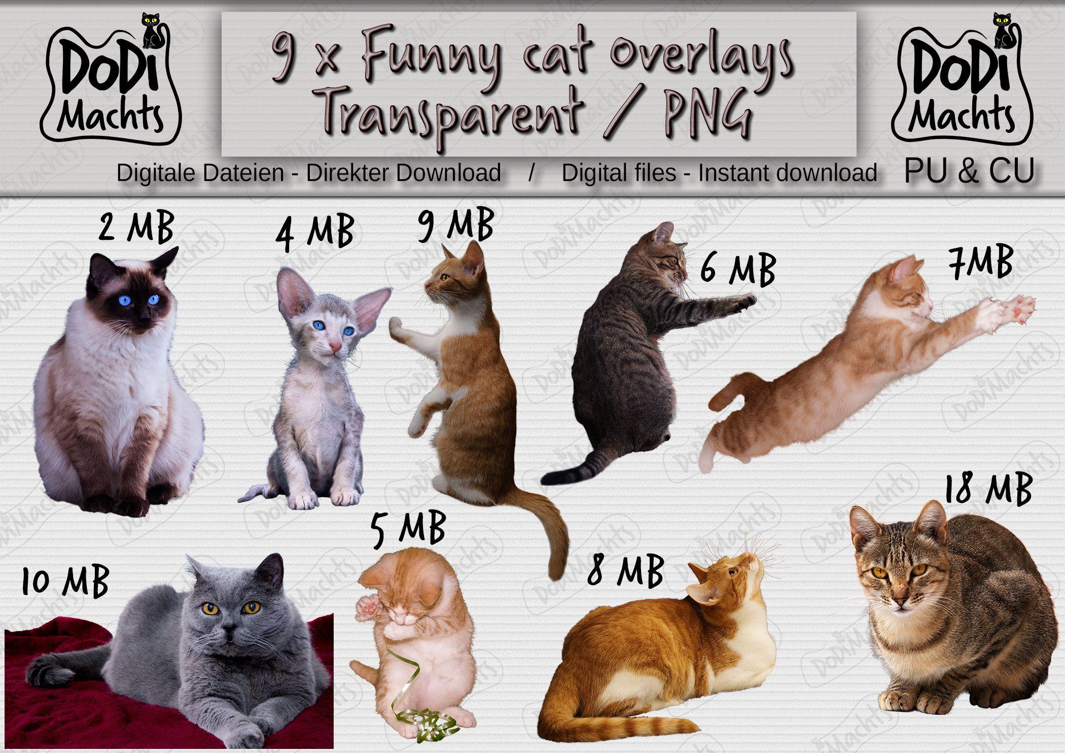 9 lustige Katzen Kitten Overlays PNG Transparent spielen, neugierig, Photoshop-Overlays Foto-Overlays, Digital, verschiedene Posen, CU