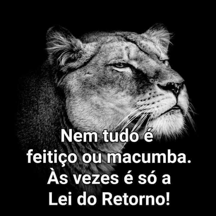 Lei Do Retorno Frases De Reflexão Pinterest Frases Words E Quotes