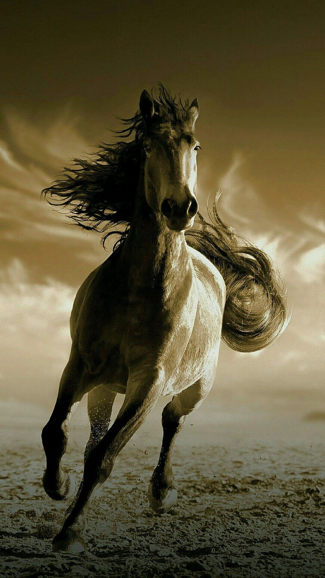 Best Wallpaper Horse Iphone - ad12b5f4212be5ab4a4ab0c73b8dee03  Perfect Image Reference_68467.jpg