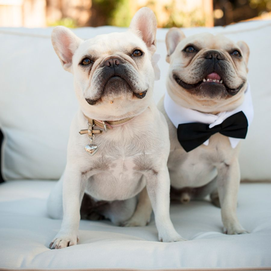 Dog Ring Bearer Wedding Tuxedo Viera Photographics Savvy Deets Bridal: Wedding Ring Barrier Dogs At Websimilar.org
