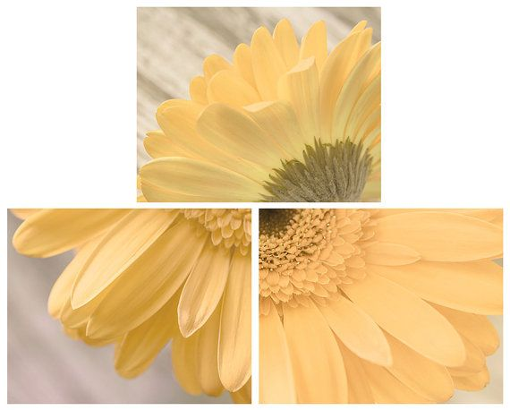 Hey, I found this really awesome Etsy listing at https://www.etsy.com/listing/192480217/set-of-3-yellow-daisy-photographs-flower