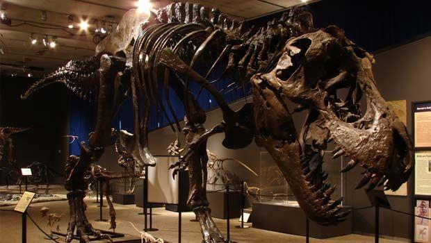 Doom of the Dinosaurs Exhibit at Cranbrook Institute of Science #dinosaurpics