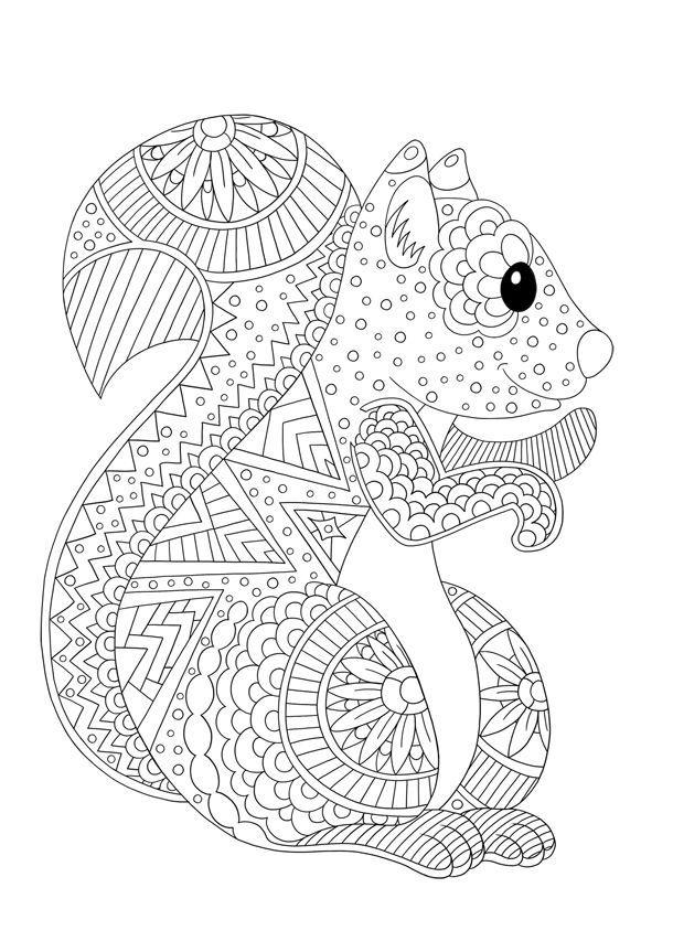 färbung von tieren zu drucken: das eichhörnchen - color