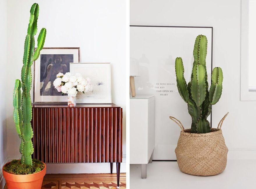 Decorar con plantas de interior de gran tamaño | Decorar tu casa es facilisimo.com