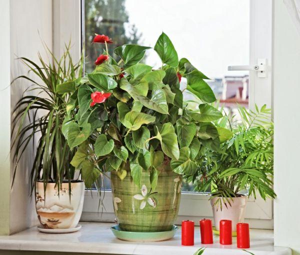 blühende zimmerpflanzen am fenster   Zimmerpflanzen   Pinterest ...