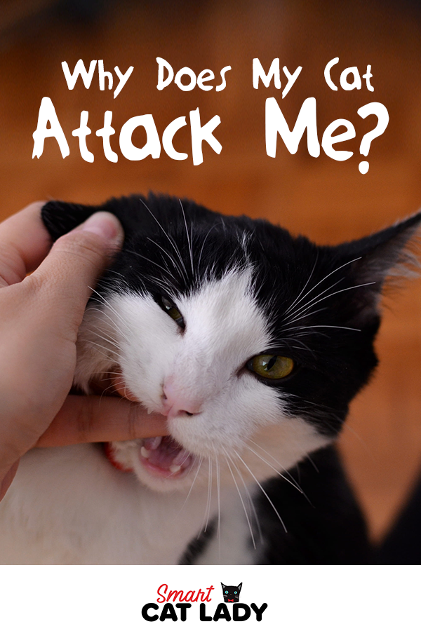 Why Does My Cat Attack Me In 2020 Cat Biting Cat Attack Cat Problems