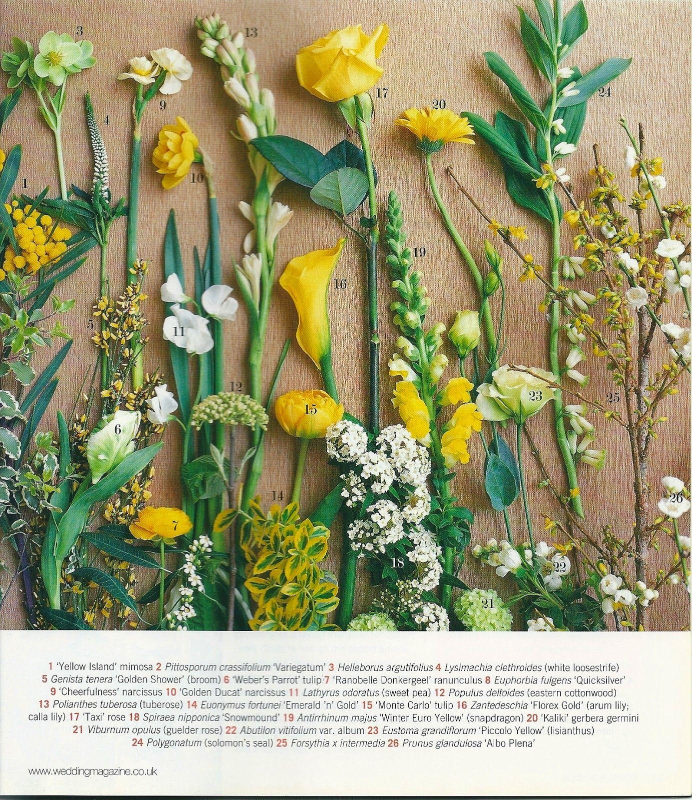 Blog Florystyczny