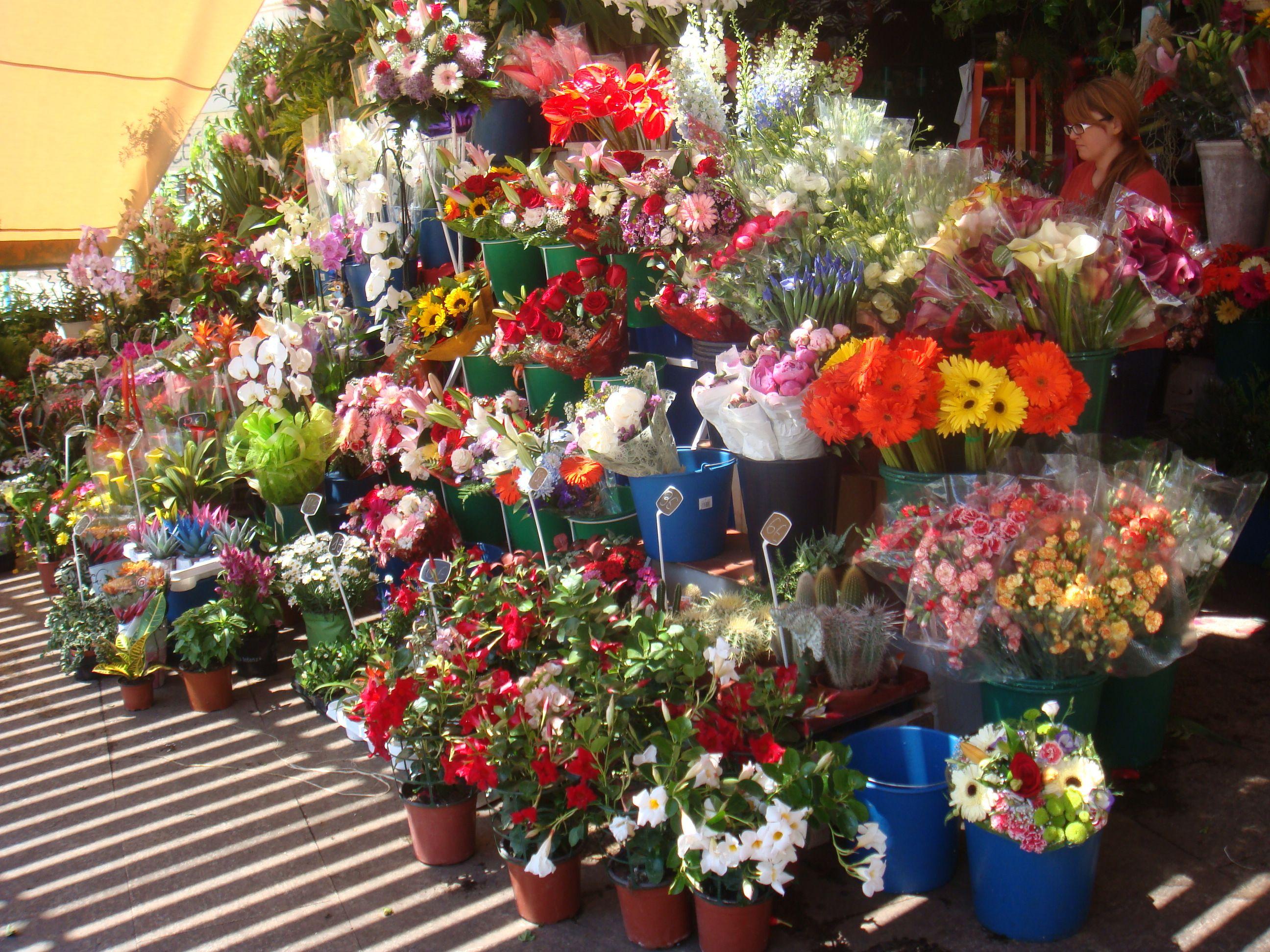 Hacía calor. Las flores eran bonitas. Tenían colores vivos. Algunas flores eran rojos, amarillos, anaranjados, morados, dorados, verdes, y rosados.