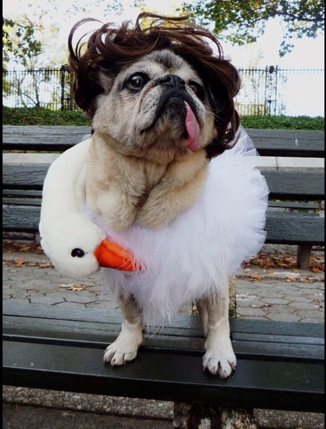 Ugly pug;)