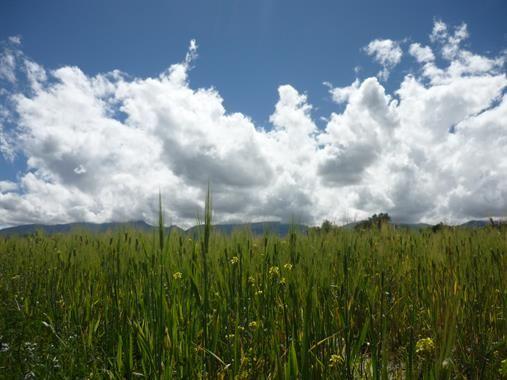 Acabo de compartir la foto de Cinthya Medianero Caja que representa a: Ayacucho